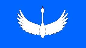 El cisne del vuelo almacen de video