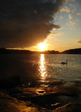 El cisne el sol y las nubes foto de archivo libre de regalías