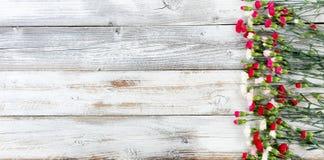 El clavel colorido florece formando la frontera correcta en el tiempo blanco Foto de archivo libre de regalías