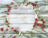 El clavel colorido florece formando la frontera del círculo en el weathe blanco Fotos de archivo libres de regalías