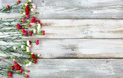 El clavel colorido florece formando la frontera izquierda en el weathere blanco Fotos de archivo