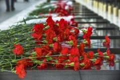 El clavel florece el símbolo del luto imagen de archivo libre de regalías