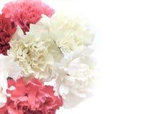 El clavel hermoso florece el ramo Fotos de archivo