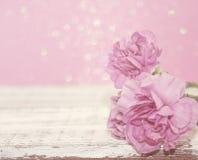 El clavel rosado florece en la tabla de madera blanca rústica Imágenes de archivo libres de regalías