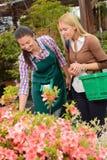 El cliente de la ayuda de la mujer del centro de jardinería elige las flores Fotos de archivo