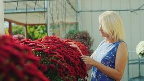 El cliente está caminando a lo largo de las flores rojas hermosas Elija las flores para la decoración casera almacen de metraje de vídeo