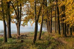 El coche condujo a lo largo del camino cerca del bosque del otoño con las hojas amarillas imágenes de archivo libres de regalías