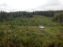 El coche en el bosque Imagenes de archivo