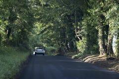 El coche va en el camino en un túnel de árboles Foto de archivo libre de regalías