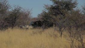 El coche va para los árboles en la sabana almacen de metraje de vídeo