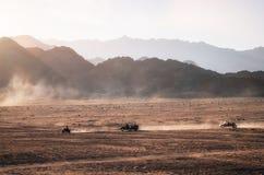 El cochecillo y los patios de ATV compite con en el desierto en la puesta del sol, Egipto de Sinaí Fotografía de archivo