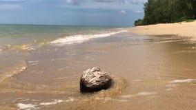 El coco en la playa con salpicar agita en Asia almacen de video
