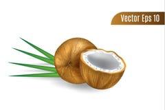 El coco realista o del marrón del vector 3d aisló el fondo stock de ilustración