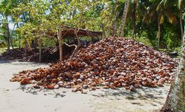 El coco Shell llena en las Seychelles foto de archivo