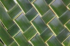 El coco verde tejido sale de textura Fotos de archivo
