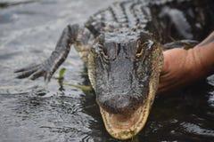 El cocodrilo con su boca abre el soporte fotografía de archivo libre de regalías