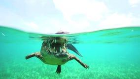 El cocodrilo cubano flota apenas sobre el agua almacen de video