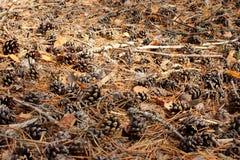 El coctail del bosque del otoño Foto de archivo libre de regalías