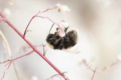 El colgante manosea la abeja Imágenes de archivo libres de regalías