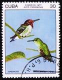El colibrí de la abeja, el zunzuncito o los helenae de Mellisuga del colibrí de Helena, sello es de la serie, circa 1977 Fotografía de archivo