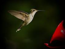 El colibrí se cierra adentro en alimentador Imagen de archivo libre de regalías