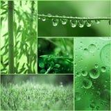 El collage de fotos de plantas, descensos del agua, hierba, se va encima imagen de archivo libre de regalías