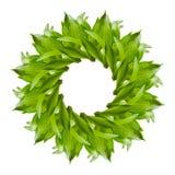 El collage del lirio verde fresco se va en el fondo blanco fotos de archivo