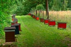El colmenar de la abeja en el bosque, las casas de la abeja de la miel de las abejas cultiva el bosque de la naturaleza Fotografía de archivo