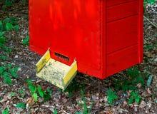 El colmenar de la abeja en el bosque, las casas de la abeja de la miel de las abejas cultiva el bosque de la naturaleza Imagenes de archivo