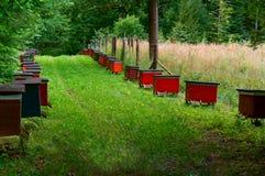 El colmenar de la abeja en el bosque, las casas de la abeja de la miel de las abejas cultiva el bosque de la naturaleza Foto de archivo libre de regalías