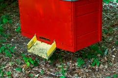 El colmenar de la abeja en el bosque, las casas de la abeja de la miel de las abejas cultiva el bosque de la naturaleza Imagen de archivo libre de regalías
