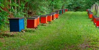 El colmenar de la abeja en el bosque, las casas de la abeja de la miel de las abejas cultiva el bosque de la naturaleza Imágenes de archivo libres de regalías