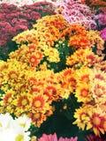 El color amarillo florece el fondo freshy Foto de archivo