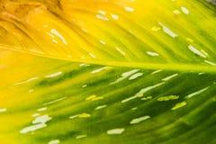 El color cambiante de la hoja Imagen de archivo