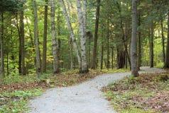 El color de la trayectoria de bosque se va durante temporada de otoño con sol Foto de archivo libre de regalías