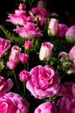 El color de rosa artificial se levantó imagen de archivo libre de regalías