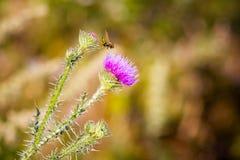 El color de rosa florece el fondo _1 Imágenes de archivo libres de regalías