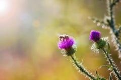 El color de rosa florece el fondo _1 Imagenes de archivo