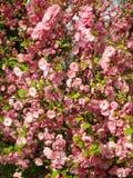 El color de rosa florece el fondo _1 Fotografía de archivo