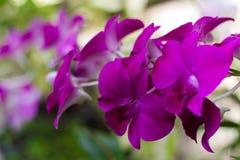 El color de rosa florece el fondo _1 Imagen de archivo libre de regalías