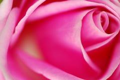 El color de rosa macro se levantó Foto de archivo libre de regalías