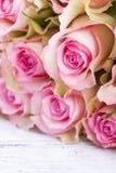 El color de rosa se levantó foto de archivo