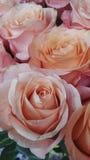 El color de rosa se levantó foto de archivo libre de regalías