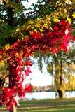 El color del árbol de arce Imagenes de archivo