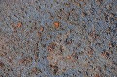 El color del moho Imagenes de archivo