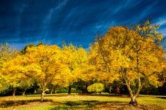 El color del otoño - monte el jardín botánico alto imagenes de archivo