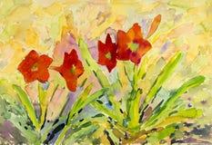 El color rojo de la pintura original abstracta de la acuarela de la amarilis florece stock de ilustración