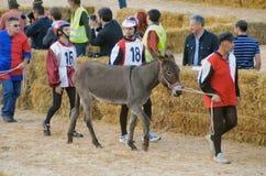 El comienzo de la trufa justa en Alba (Cuneo), se ha celebrado por más de 50 años, la raza del burro Fotos de archivo libres de regalías