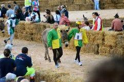 El comienzo de la trufa justa en Alba (Cuneo), se ha celebrado por más de 50 años, la raza del burro Foto de archivo