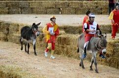 El comienzo de la trufa justa en Alba (Cuneo), se ha celebrado por más de 50 años, la raza del burro Imágenes de archivo libres de regalías
